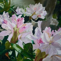 Witte Rododendron